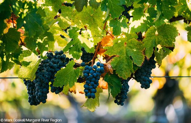 Cloudburst Wine - Margaret River Region WA