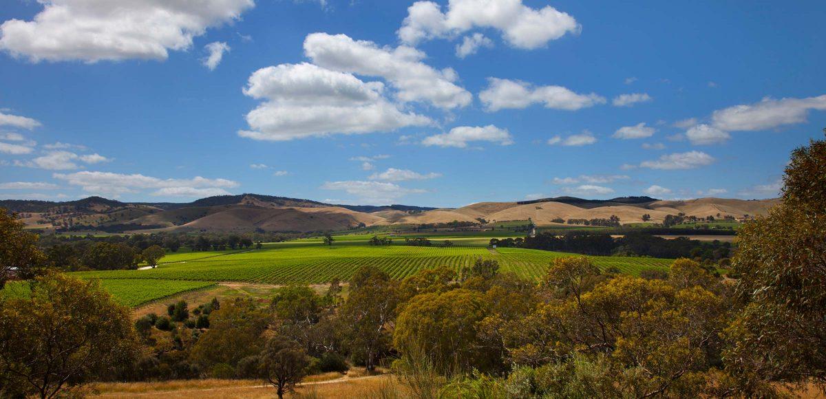 Jacobs-Creek-vineyard-2